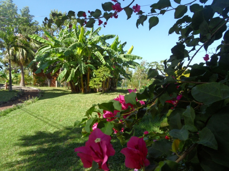 Bienvenue austral passion location de bungalows l for Location meuble ile de la reunion