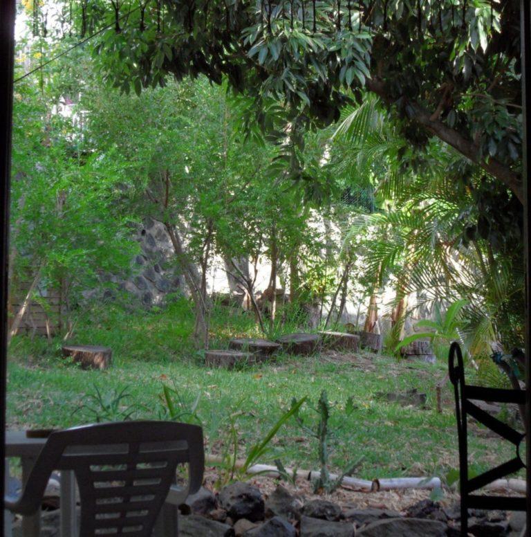 Vue sur le jardin tropical du Bungalow Papaye