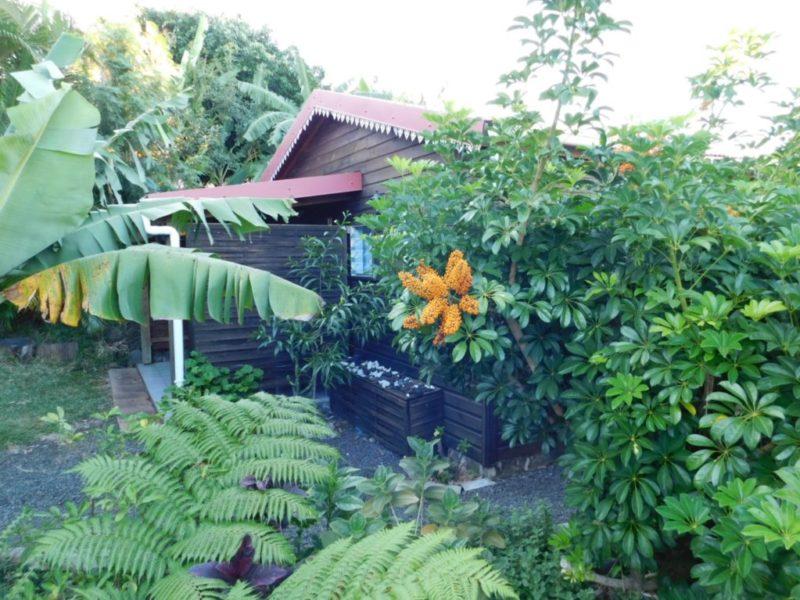 bungalow letchi terrasse jardin