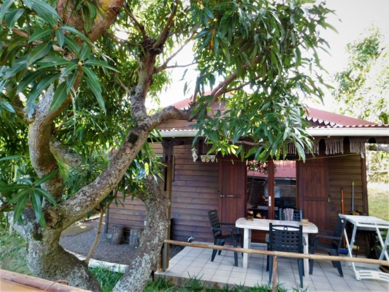 Terrasse bungalow mangue Arbres fruitiers manguier
