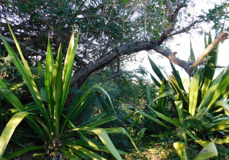 bungalow choka végétation